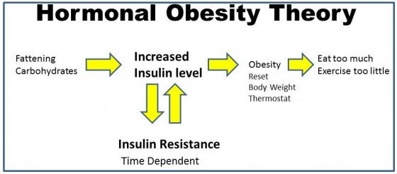 Hormonal-Obesity-theory-step-2