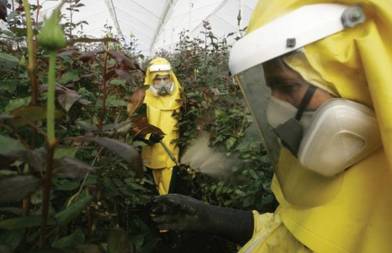 Workers spray foliate fertilizer at the Inversiones Morcote flower farm in Bogota. Some US consumer advocates complain that Colombia's cut-flower industry, the second largest in the world, is ignoring market trends and relying too heavily on the use of pesticides. AP